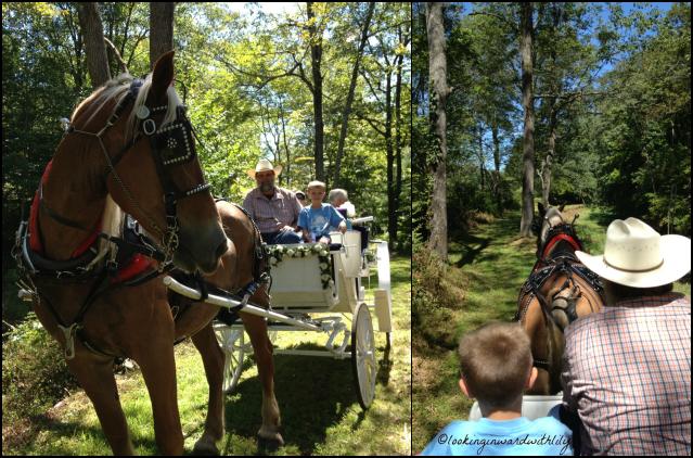 Horse Blog 1-1