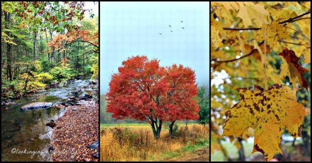 Autumn Leaves Blog 1