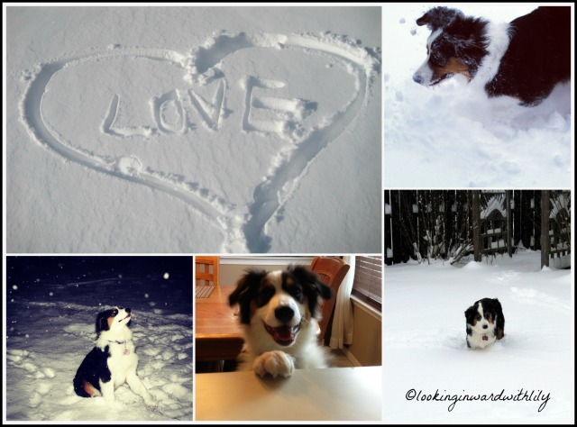 Dakota Snow Collage