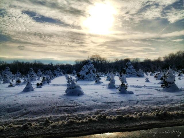 Winter Trees Blog